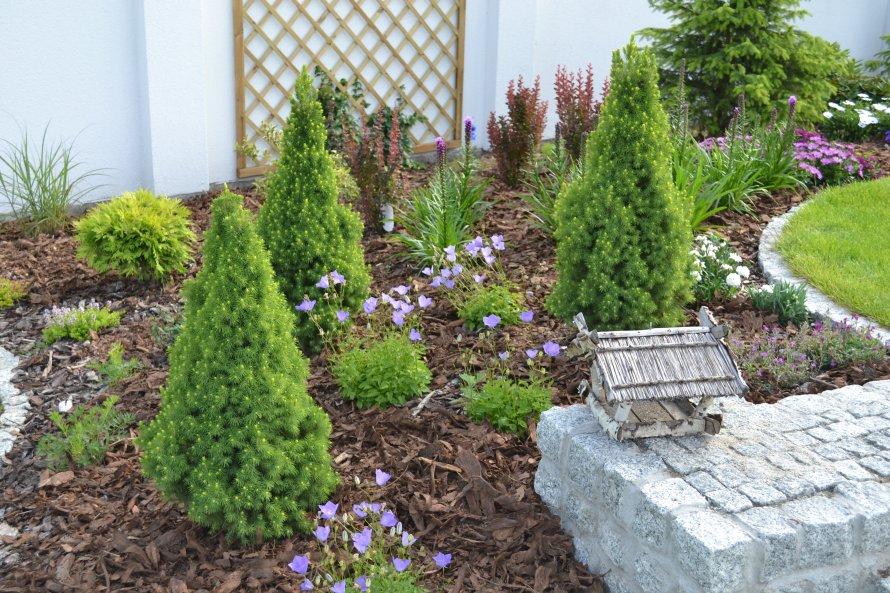 Rośliny iglaste, liściaste i byliny uzupełniono cebulowymi.