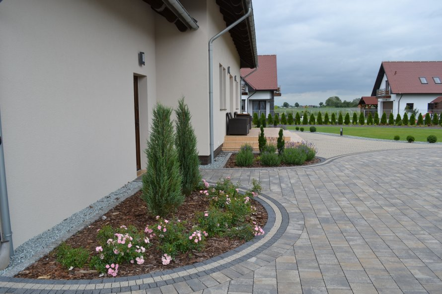 Mało wymagające rośliny: jałowce, cisy, lawenda i róża odmiany 'The fairy'.