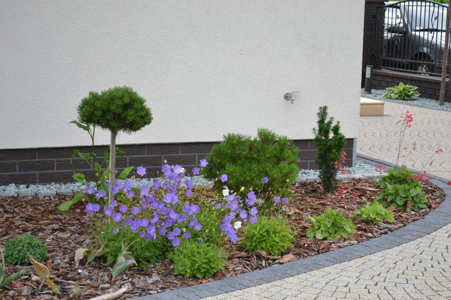 Zakładanie rabaty z wykorzystaniem bylin i roślin iglastych.