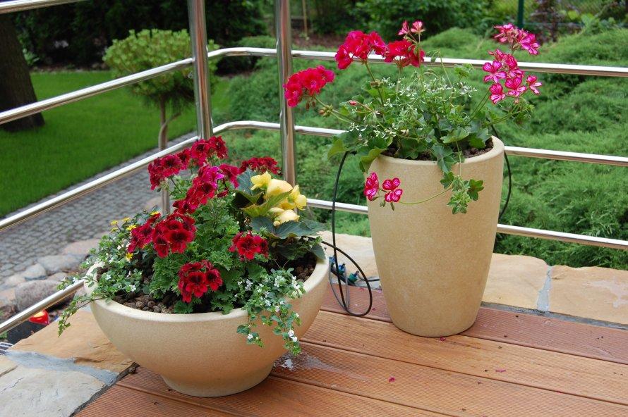 Proste linie regularnie rozmieszczonych desek tarasu tworzą idealną podstawę dla pojemników z roślinami. W przedstawionym założeniu liście mają różne wielkości, fakturę i odcień. Kwiaty intensywną barwę. Takie zestawienie zachęca do zatrzymania wzroku w tym punkcie.