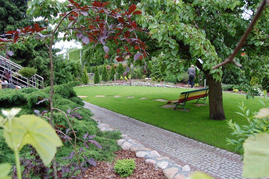 Widok od strony domu na ogród założony na planie prostokąta. Owalnie kończący się trawnik powiększa jego przestrzeń. Wzrok delikatnie przesuwa się od strony lewej ku prawej zatrzymując się na wiekowej moreli.
